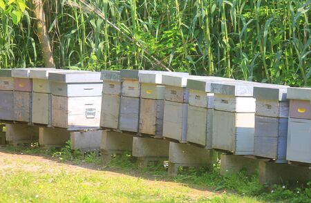 some beehives in the field