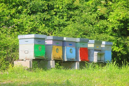 some beehives in the meadow