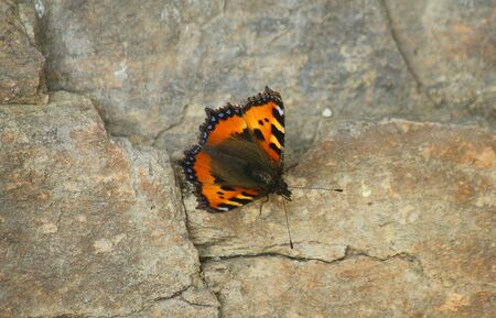 a butterfly on the stone