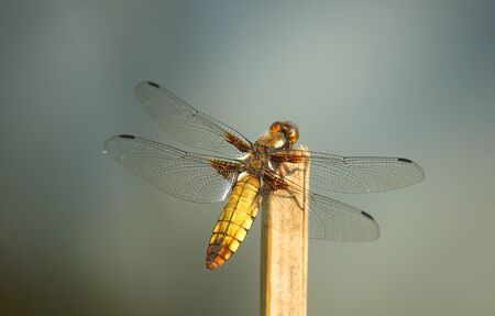 a dragonfly on the wood