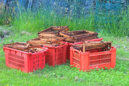 some baskets with frames for bees Standard-Bild