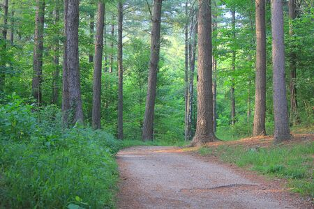 a road in the forest in Spring Standard-Bild