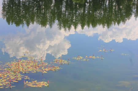 panorama with reflections of vegetation in the lake