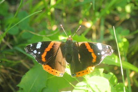 a butterfly in the vegetation