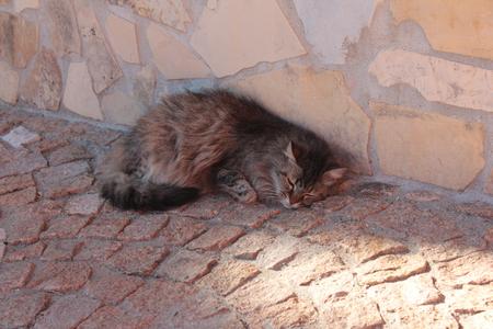 Sleeping cat spring in Sardinia