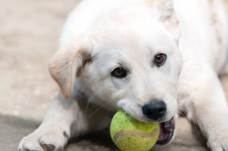 White dog baby playing in the courtyard