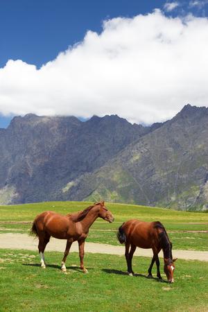 Horses pasturing free in the fields near Kazbegi in Georgia Imagens
