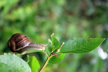 A background with a snail riding on a leaf Stock Photo