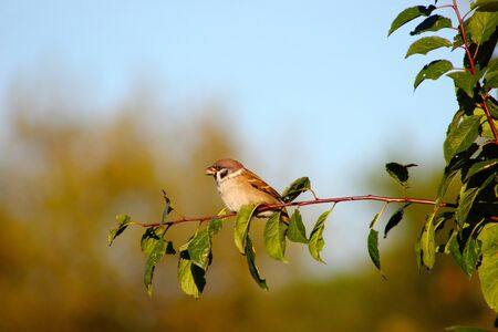 A sparrow eating on a branch