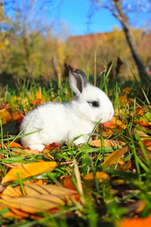 baby hare in the field