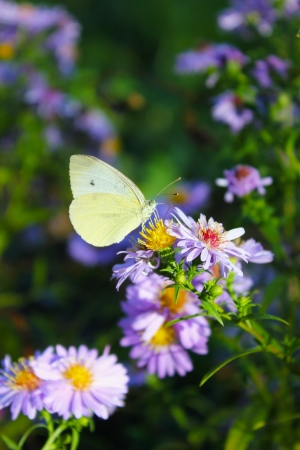 butterfly and flowers in a sunny day Stock Photo