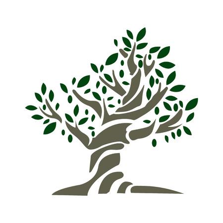 оливки: Оливковое дерево Иллюстрация