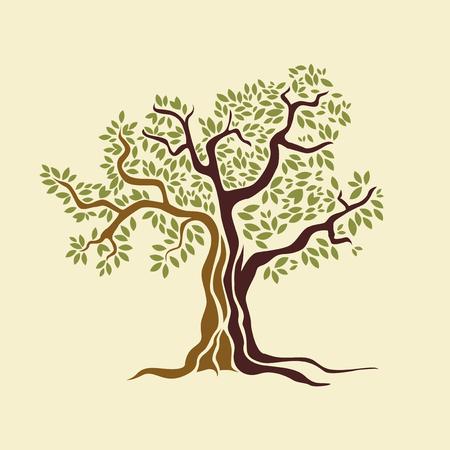 Olive tree vector illustration