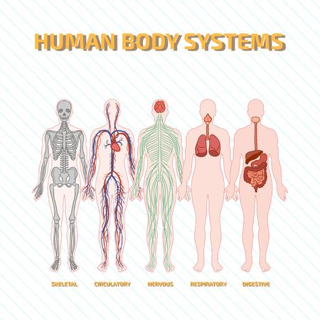 sistema digestivo: Sistemas del cuerpo humano