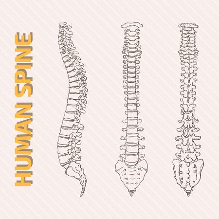skeletal system: Skeletal System
