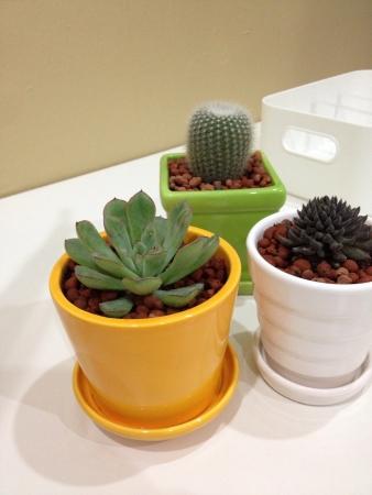 interior: Cactus on work desk Stock Photo