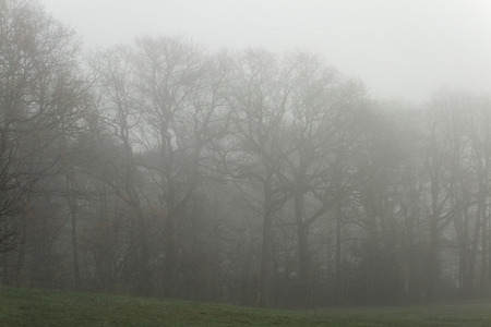 forest in winter and morning fog Stock Photo