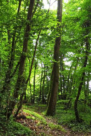 Spring forest, undergrowth