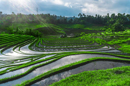 Photo of greenish rice fields with lines on bali in Indonesia