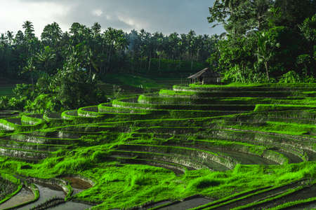Photo of greenish rice fields with lines on bali in Indonesia Stock fotó