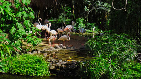 Flock of pink flamingos in the usual habitat in the forest with green plants near the water Reklamní fotografie
