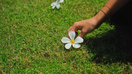 A young European girl takes a white plumeria flower with her hand lying on a green lawn under the bright sun 스톡 콘텐츠 - 163010724