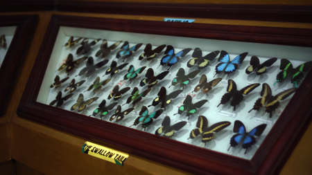 Buruan, Tabanan, Bali, Indonesia - 3, January 2021: Large Butterfly Collection. Closeup view of many different colorful butterflies on bright white window 스톡 콘텐츠 - 162732234