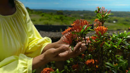 Hands of a dark-skinned girl in a yellow dress touches the red flowers of a plant in the backyard