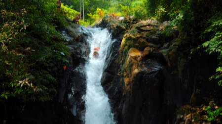 Picture of waterfall with rocks among tropical jungle with green plants and trees and water falling down into the river