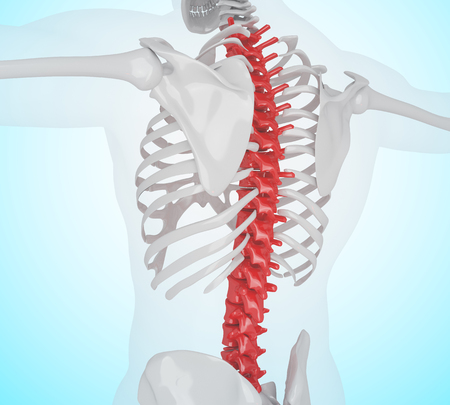 3d llustration. Human skeleton with back pain, Skeleton Anatomy concept. Stock Photo