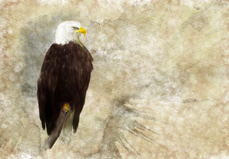 eagle feather: American bald eagle digital watercolor illustration Stock Photo