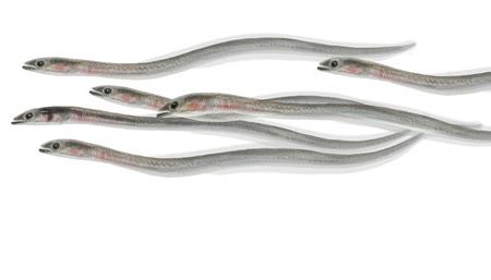 Digitale illustratie van een groep van Eel glasaal Stockfoto