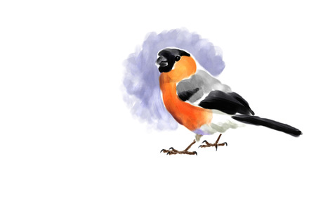 Digital watercolor illustration of a bullfinch