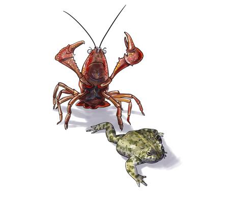 amphibians: Amphibians conservation,crab danger digital illustration Stock Photo