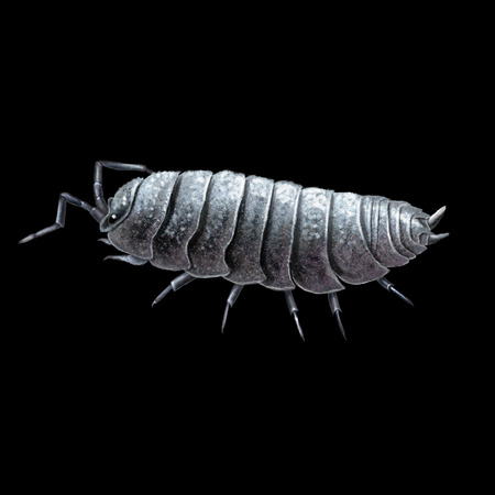 polly: Digital illustration of a the (common) pill-bug, (common) pill woodlouse, rolly polly or potato bug Stock Photo
