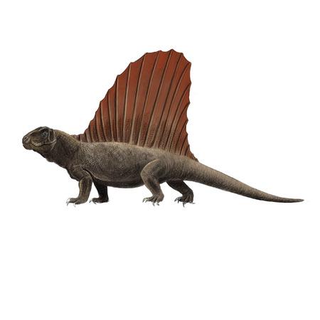 reptile: Ancient reptile digital illustration Dimetrodon