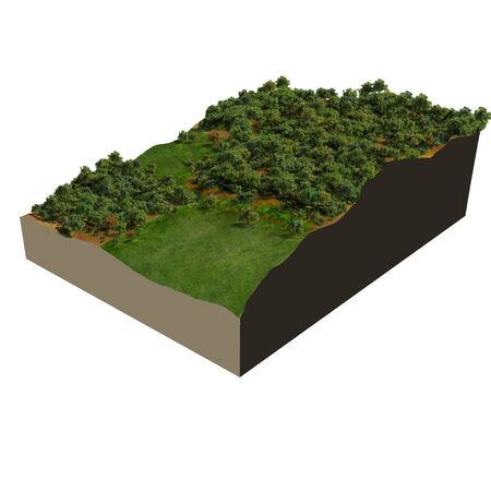 3d model: 3d model oak forest, digital illustration Stock Photo