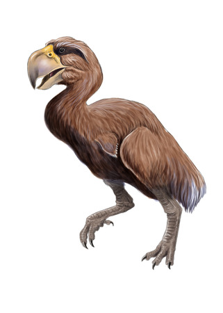 flightless: Gastornis illustration, ancient giant bird