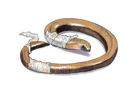 fragilis: Slow worm lizard digital illustration