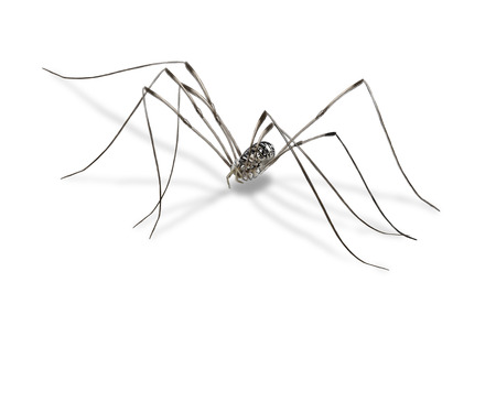 daddy long legs: Digital illustration of a harvestmen, isolated Stock Photo