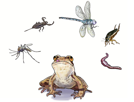 Wat doen amfibieën eten? digitale illustratie Stockfoto