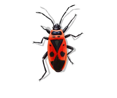 firebug: Digital illustration of a firebug, isolated