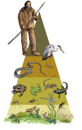 Digital illustration of ecological pyramid, amphibians and reptils Stock Photo