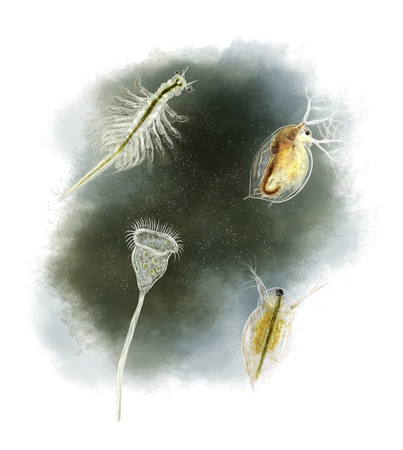 Digital illustration of a daphnia, vorticella and Brine shrimp