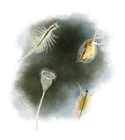 Digital illustration of a daphnia, vorticella and Brine shrimp