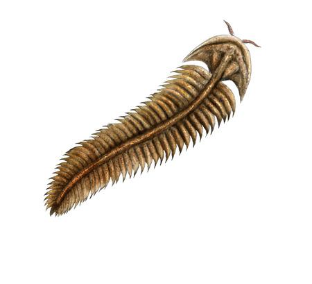 Ediacara Spriggina fossil, digital illustration Foto de archivo
