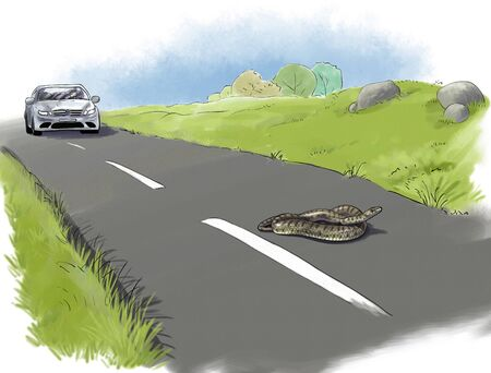 reptilian: snake in danger on road. Reptilian protection