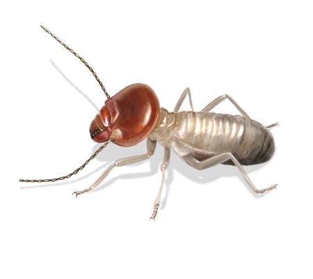 Digital illustration of a worker termite Foto de archivo