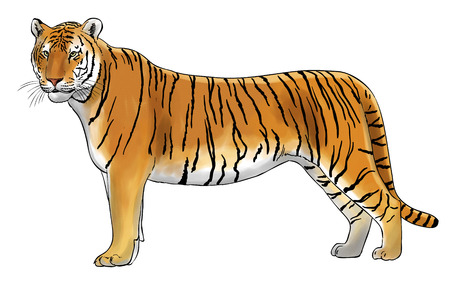 inked: Digital illustration of a tiger, inked