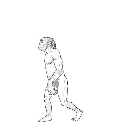 habilis: Human evolution digital  illustration, homo erectus, australopithecus, homo habilis, neanderthal, cromagnon